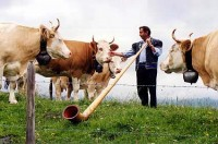 cows and alphorn 200x132 custom Trans Alpine Adventure