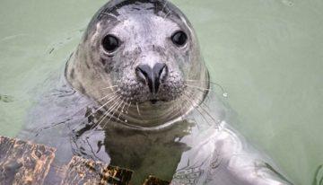 Cornwall Seal Sanctuary